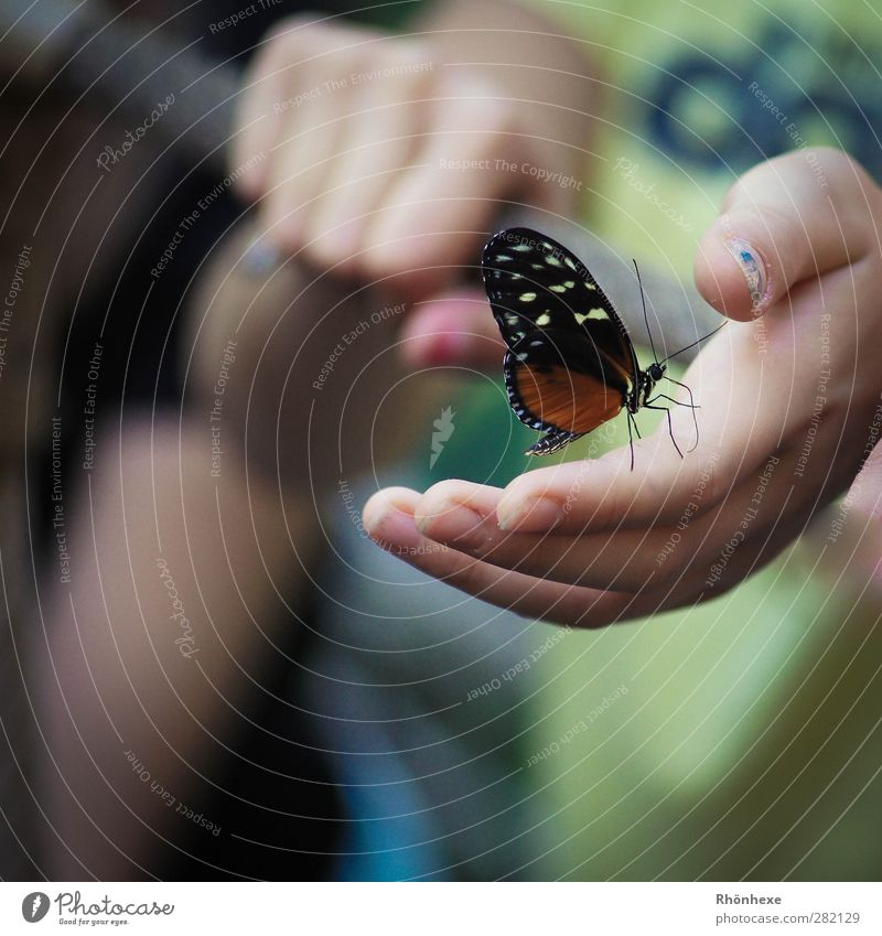 Magic moment Hand Butterfly Zoo 1 Animal Happy Calm Close-up Shallow depth of field Animal portrait