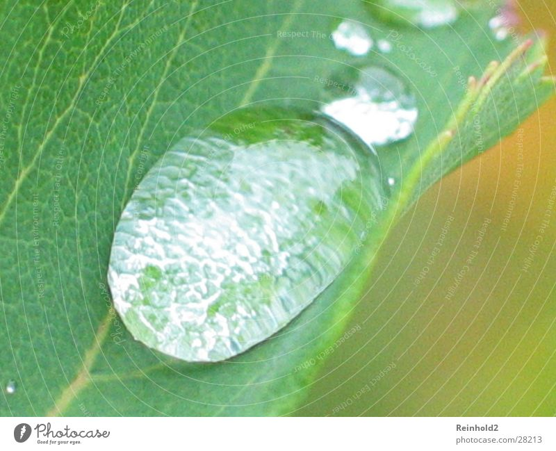 Water Green Leaf Garden Drops of water Rope