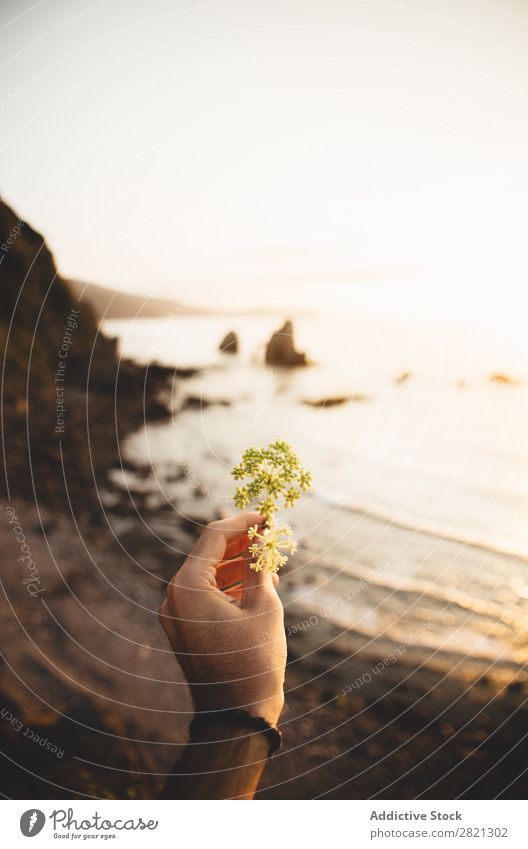 Hand holding flower at seaside Human being Man Flower Small Blossom leave Ocean Landscape Water Coast Vacation & Travel Nature Summer Sky Rock Island Tourism