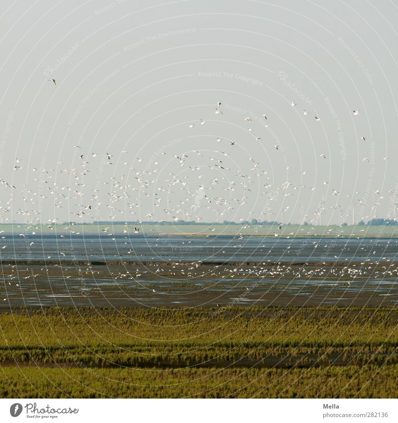 Off to a new week Environment Nature Landscape Animal Earth Air Coast North Sea Mud flats Bird Seagull Group of animals Flock Flying Free Together Natural