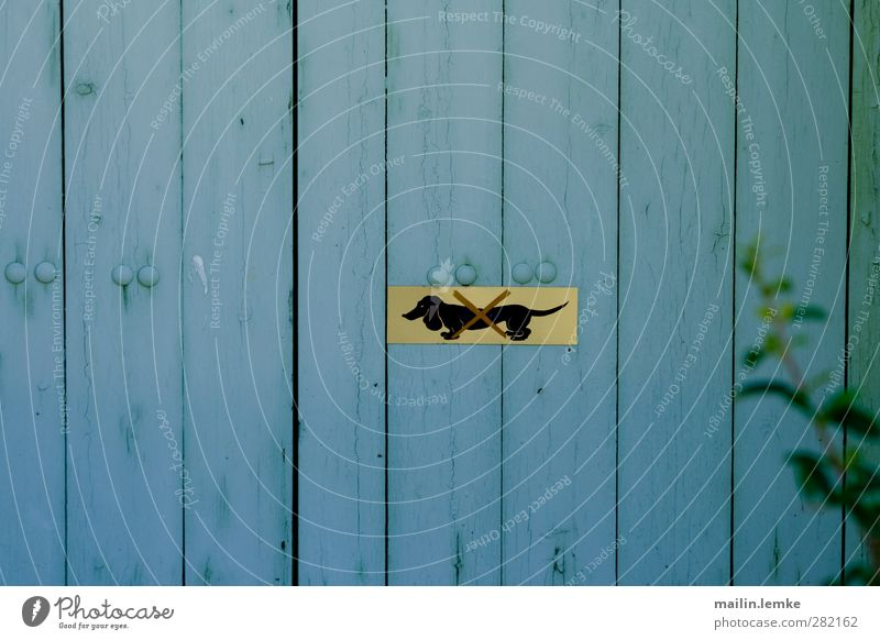 dachshund Signs and labeling Wood Metal Blue Yellow Bans Dachshund Colour photo Exterior shot Deserted Central perspective