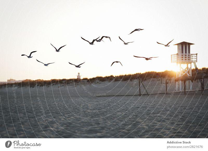 Flying seagulls at beach Seagull Beach Sunset lifeguard tower Tower Construction Horizontal Sand Vantage point Sunbeam Sky Exterior shot abandoned Movement Bird