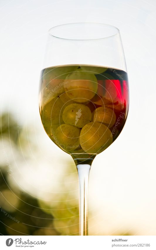 Red or white? Food Fruit Nutrition Beverage Alcoholic drinks Wine White Red wine Redwine glass White wine Whitewine glass Bunch of grapes Vine Vineyard Glass