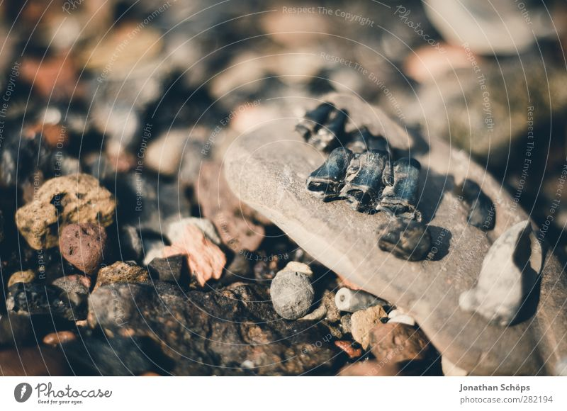 the rest of the fixed Environment Nature Brown Stone Beach Pebble beach Coast Skeleton Fossil Death Collection Remainder Stony Multicoloured Gloomy Transience