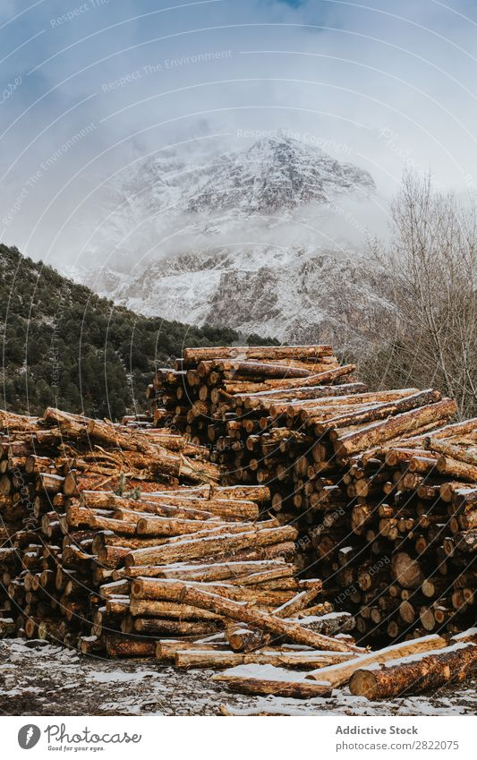 Woods stacked and prepared Trunk Fuel Stack Tree Log Timber Firewood Cut Nature Natural Accumulation Material Rough Forest Industry Logging woodpile Brown Rural