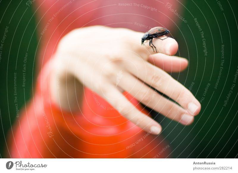 hand Beetle nature Elegant Exotic Healthy Human being Feminine Young woman Youth (Young adults) Woman Adults Hand Fingers 1 13 - 18 years 18 - 30 years