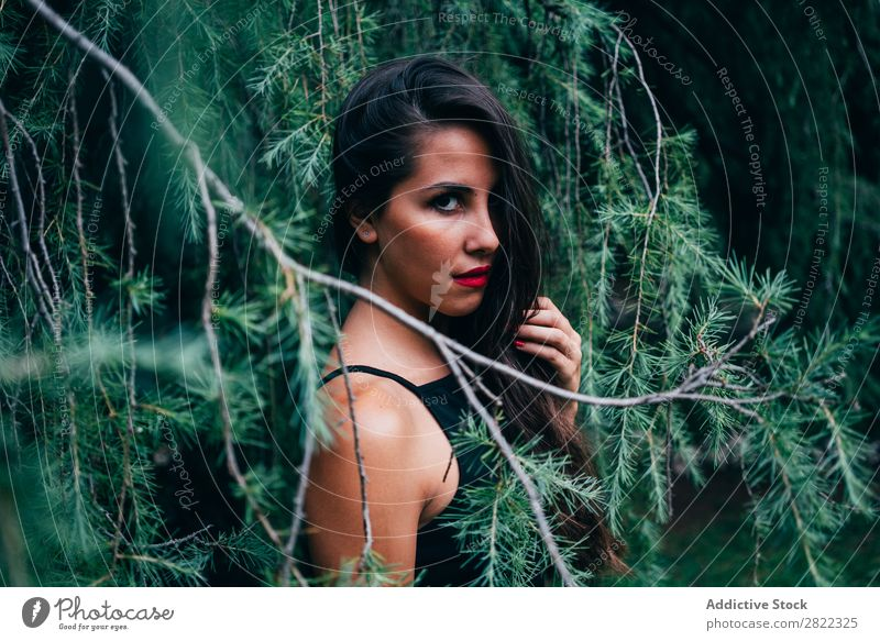 Pretty woman in fir branches Woman pretty Youth (Young adults) Beautiful Stand Tree Branch of business Green Park Forest Looking into the camera Brunette