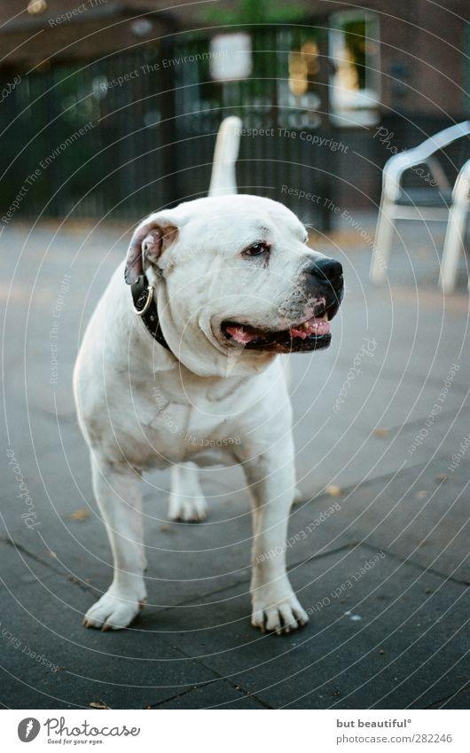 Dog Animal Exceptional Elegant Happiness Safety Friendliness Trust Serene Athletic Pet Positive Caution Original Love of animals Rebellious