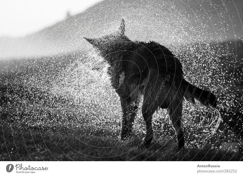 Dog Nature Water Animal Environment Rain Stand Beautiful weather Pet