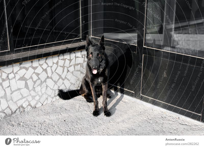 Dog Town Wall (barrier) Wall (building) Facade Animal Pet 1 Sit Colour photo Black & white photo Subdued colour Exterior shot Experimental Deserted Day Contrast
