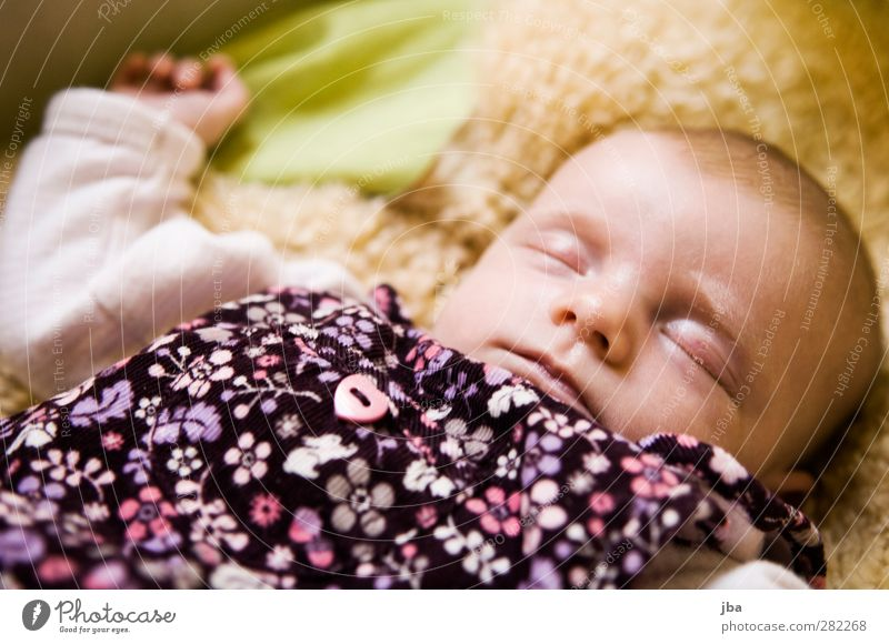 8 weeks Contentment Relaxation Calm Bed Crib Pelt Feminine Baby Toddler Face 1 Human being 0 - 12 months body Dress Heart Flower Pink Short-haired Lie Sleep