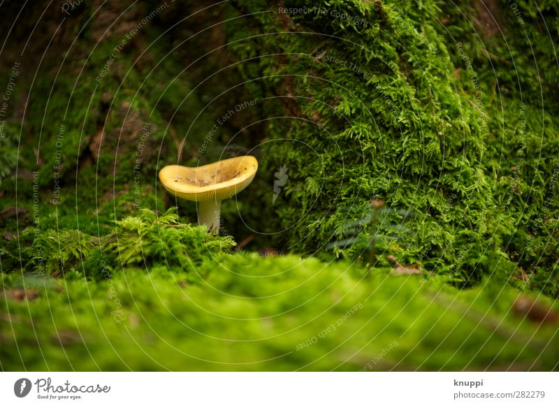 lucky devil Environment Nature Elements Earth Autumn Beautiful weather Park Forest Under Yellow Green Tree trunk Beige Mushroom Mushroom cap Old Moss