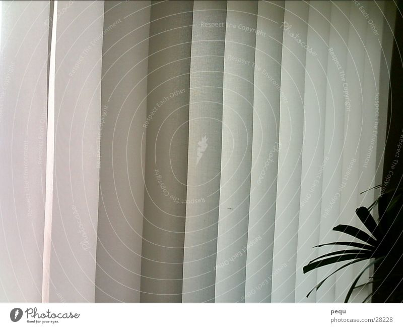 Stripe Palm tree Vertical Curtain Joist