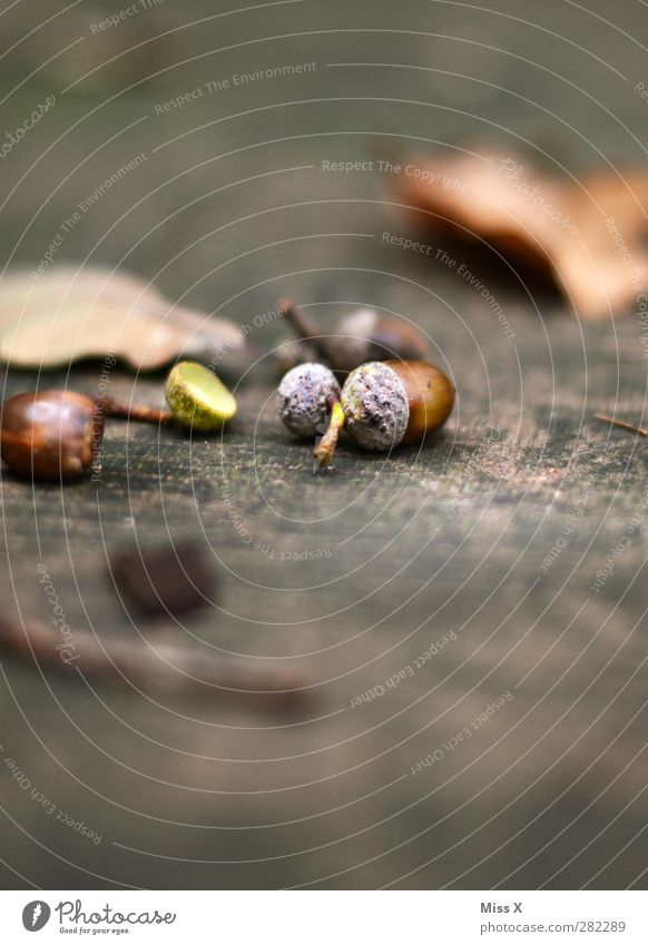 Nature Tree Leaf Forest Autumn Wood Small Brown Tree trunk Autumnal Acorn Automn wood