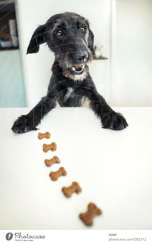 *2,100 bone job. Joy Table Animal Pet Dog Animal face Pelt Paw Exceptional Happiness Funny Cute Black White Appetite Idea Creativity Terrier Feed Animalistic
