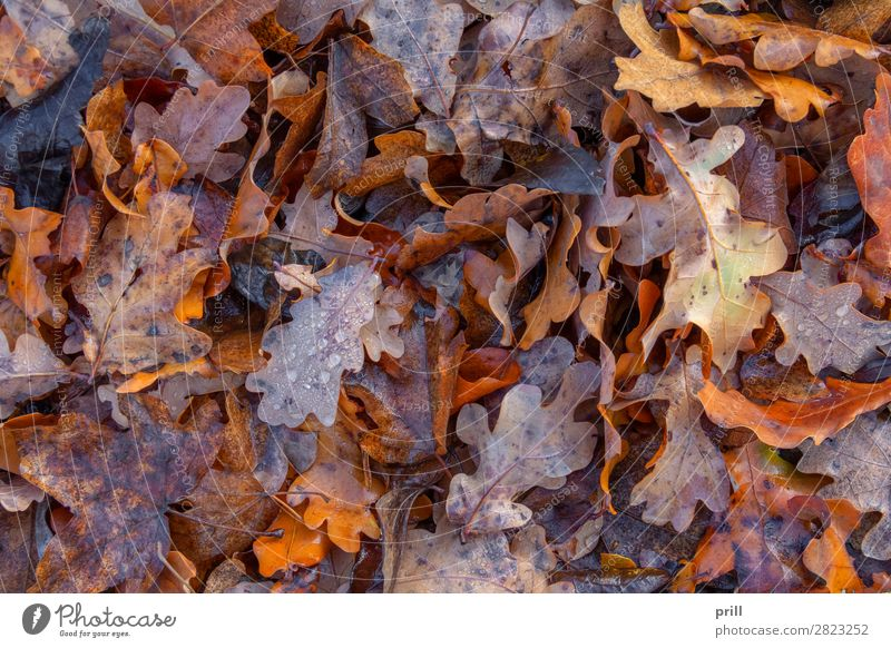 wet autumn leaves Nature Water Drops of water Autumn Leaf Fluid Wet Above Decline Autumn leaves full-frame image Natural Damp detail Botany Dew leafy full-size