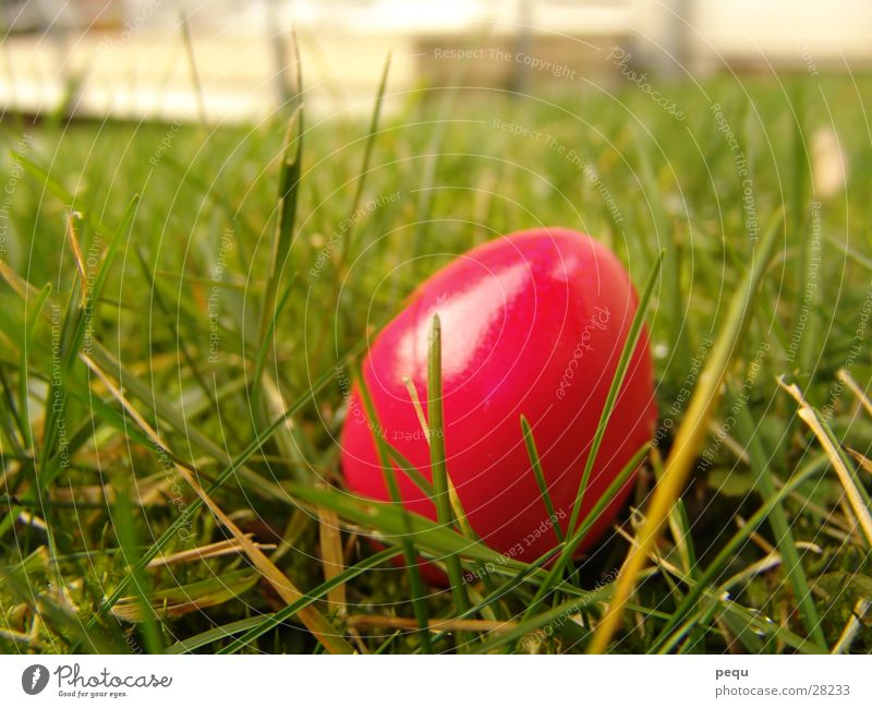 Green Red Meadow Pink Lawn Egg Magenta