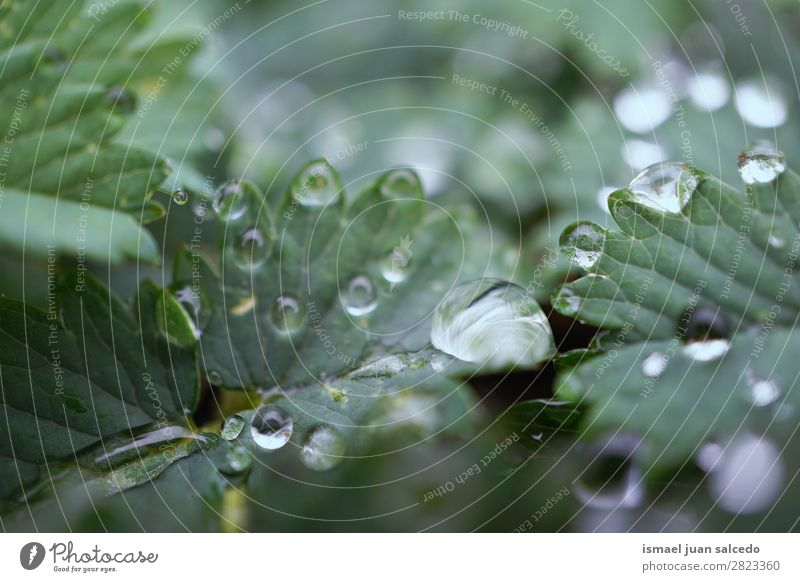 drops on the green leaves Plant Leaf Drop Rain Glittering Bright Green Garden Floral Nature Abstract Consistency Fresh Exterior shot background
