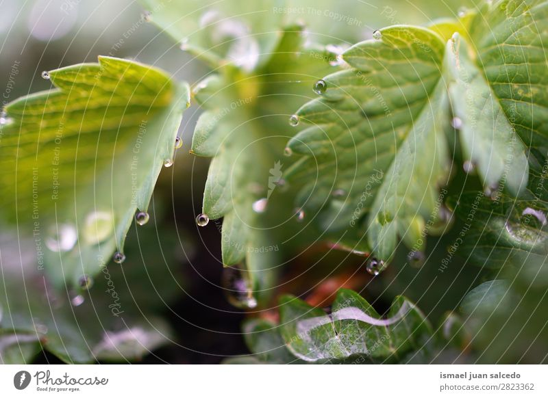 drops on the leaves Plant Leaf Drop Rain Glittering Bright Green Garden Floral Nature Abstract Consistency Fresh Exterior shot background Beauty Photography