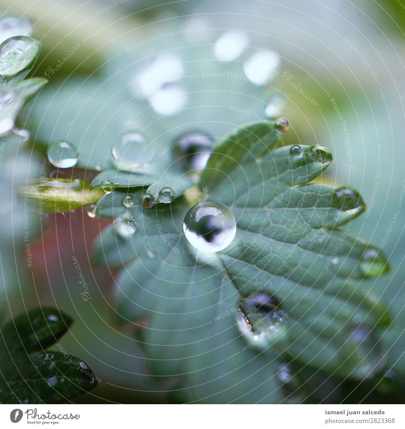 drops on the green leaf Plant Leaf Drop Rain Glittering Bright Green Garden Floral Nature Abstract Consistency Fresh Exterior shot background Beauty Photography