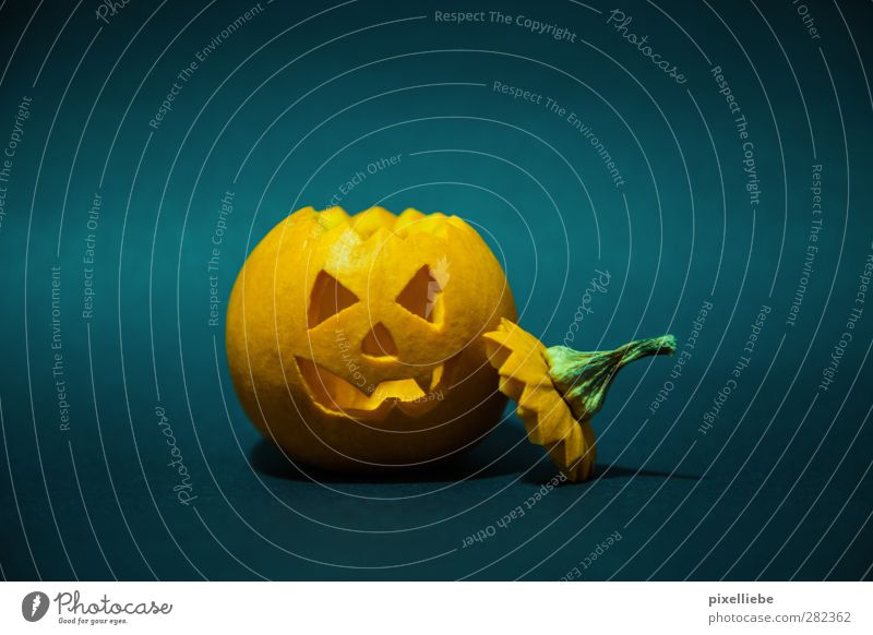 Happy Halloween Food Vegetable Nutrition Thanksgiving Hallowe'en Decoration Aggression Threat Dark Creepy Orange Fear Pumpkin Pumpkin time Carve Face