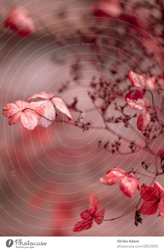 Nature Plant Red Flower Winter Autumn Blossom Natural Sadness Emotions Garden Brown Bushes Grief Wellness Delicate