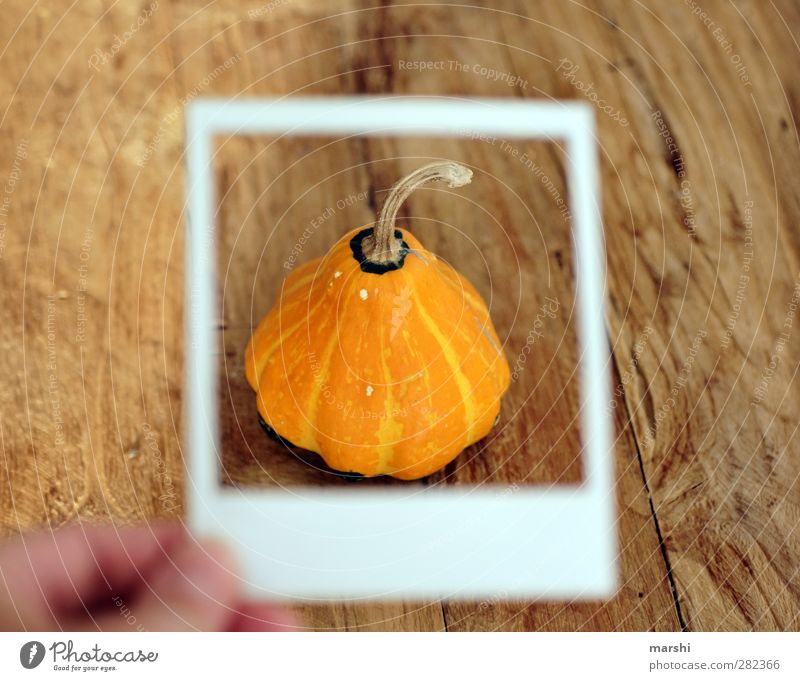 Pumpkin season II Food Vegetable Nutrition Eating Orange Pumpkin time Pumpkin plants Polaroid Bicycle frame Frame Wooden table Edible Hallowe'en Colour photo