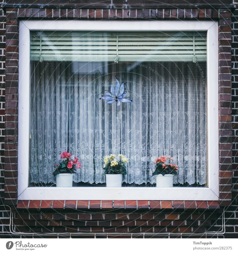 Langeoog Window Gloomy Orderliness Petit bourgeois Curtain Car Window Flowerpot Venetian blinds Brick Arrangement Tidy up Household