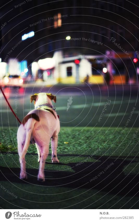 Dog City Animal House (Residential Structure) Street Style Esthetic Adventure Observe Curiosity Traffic infrastructure Pet Downtown Crossroads Walk the dog