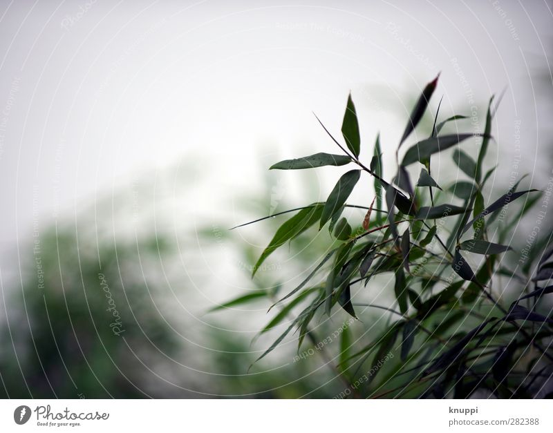 Nature Water Green White Plant Leaf Clouds Environment Autumn Grass Garden Air Park Rain Large Wild