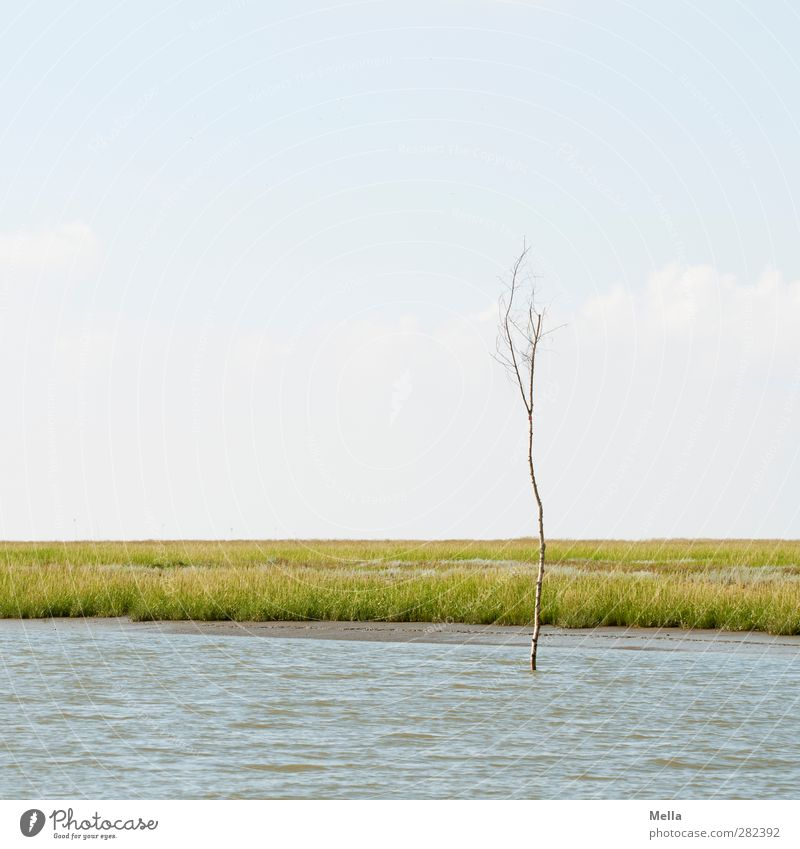 Single Environment Nature Landscape Air Water Plant Tree Coast River bank North Sea Navigable water Stand Thin Small Calm Far-off places Individual Empty