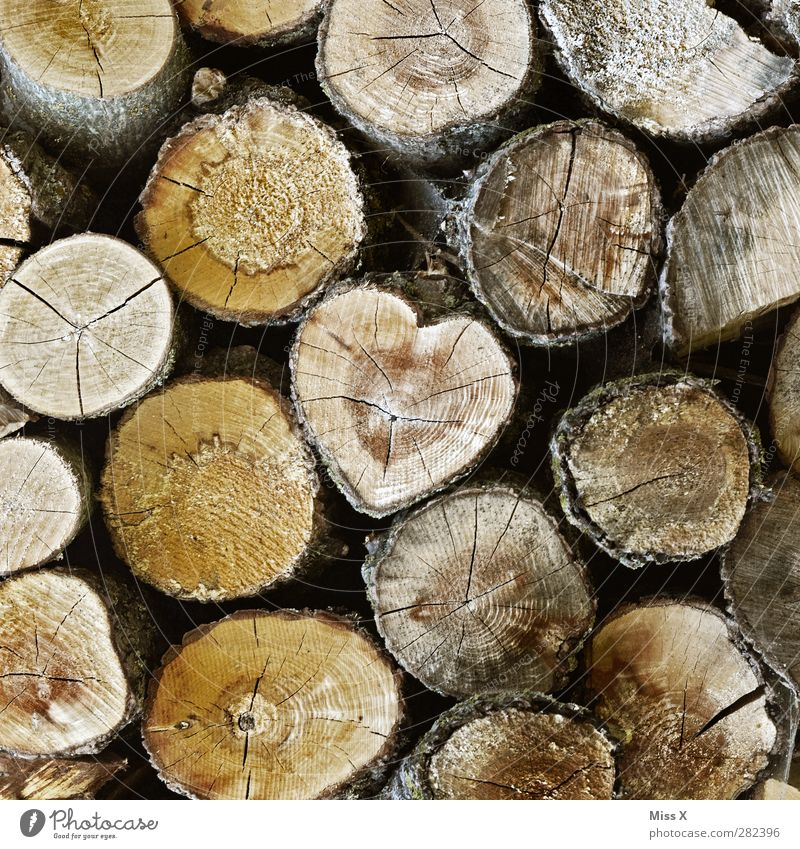 Also a heart found Wood Brown Emotions Love Infatuation Tree trunk Texture of wood Firewood Annual ring Heart-shaped Tree bark felling Cut down Colour photo