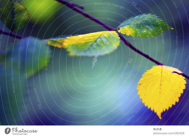 Nature Blue Plant Leaf Calm Environment Yellow Life Autumn Natural Hang Survive