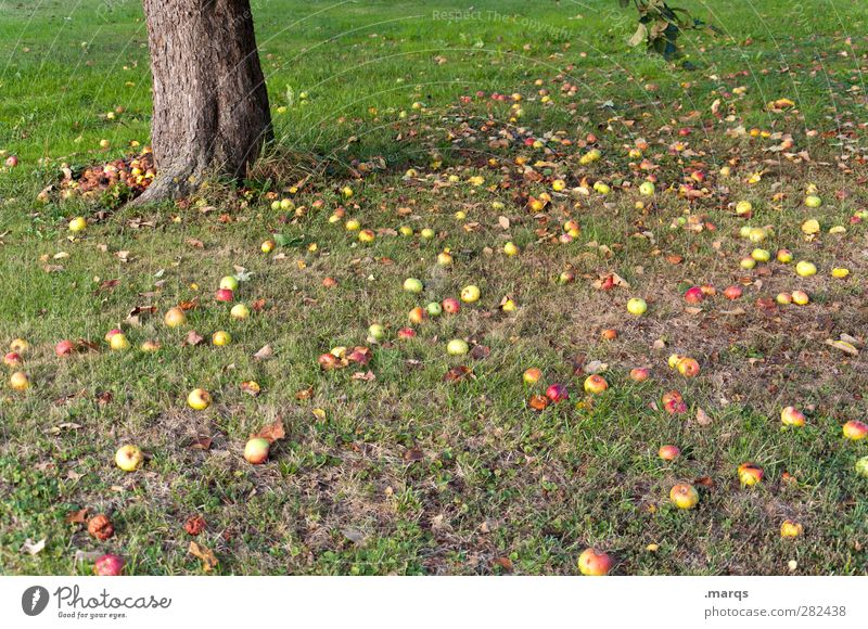 fruitarianism Fruit Apple Eating Windfall Vegetarian diet Vegan diet frugarism Lifestyle Agriculture Forestry Environment Nature Plant Autumn Tree Tree trunk