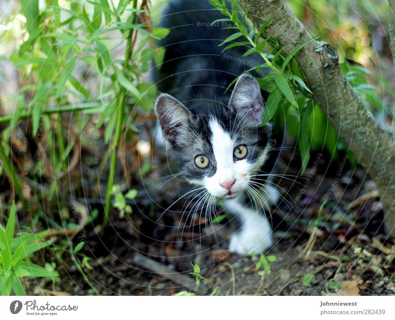 nabbed Cat Animal face Hunting Captured Snapshot Intuition Mysterious Upward Colour photo Exterior shot Shallow depth of field Animal portrait