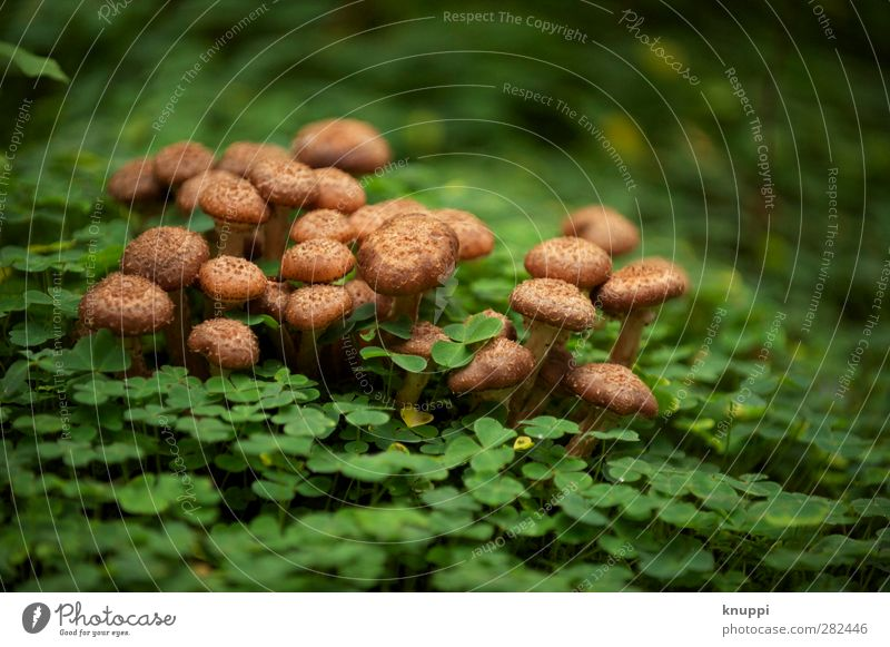 Nature Plant Green Beautiful Relaxation Leaf Calm Forest Black Environment Autumn Brown Park Wild Weather Illuminate