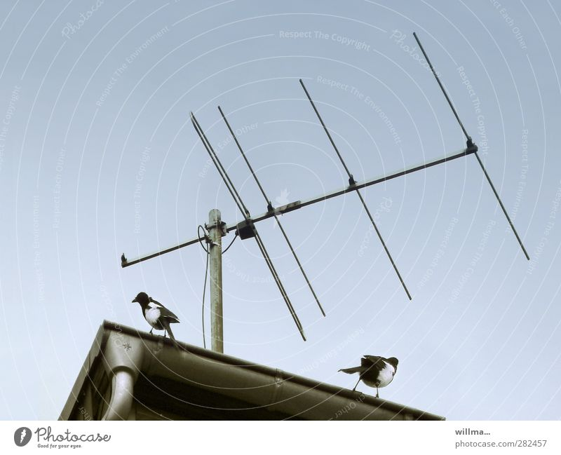 bugging affair Podcast 2 Human being Animal Cloudless sky Roof Eaves Antenna Bird Pair of animals Observe Listening Communicate Argument Curiosity Mistrust