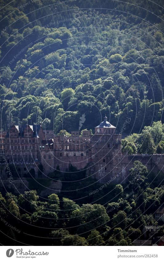 Heidelberg cake for the holiday Tourism Environment Nature Landscape Tree Forest Castle Heidelberg Castle Looking Esthetic Firm Brown Green Emotions Moody