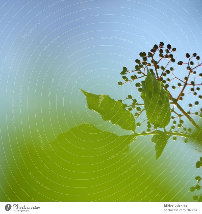 Sky Nature Blue Green Plant Leaf Agricultural crop