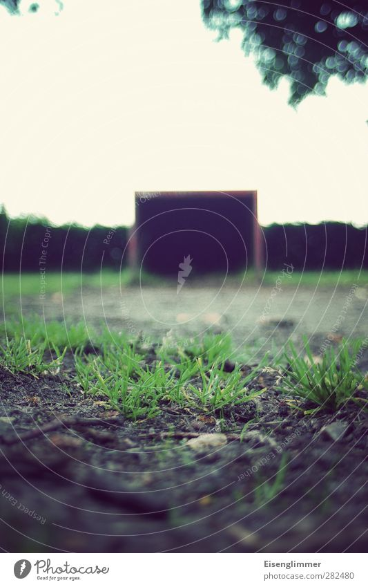amateur football field Ball sports Soccer Football pitch Summer Tree Meadow Grass surface Sports Dark Goal Grass green Colour photo Subdued colour Exterior shot