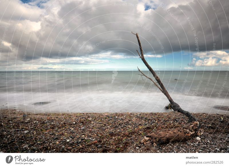 strand.good Landscape Sky Clouds Storm clouds Autumn Weather Tree Coast Beach Baltic Sea Deserted Stone Sand Blue Brown Gray Stranded Flotsam and jetsam