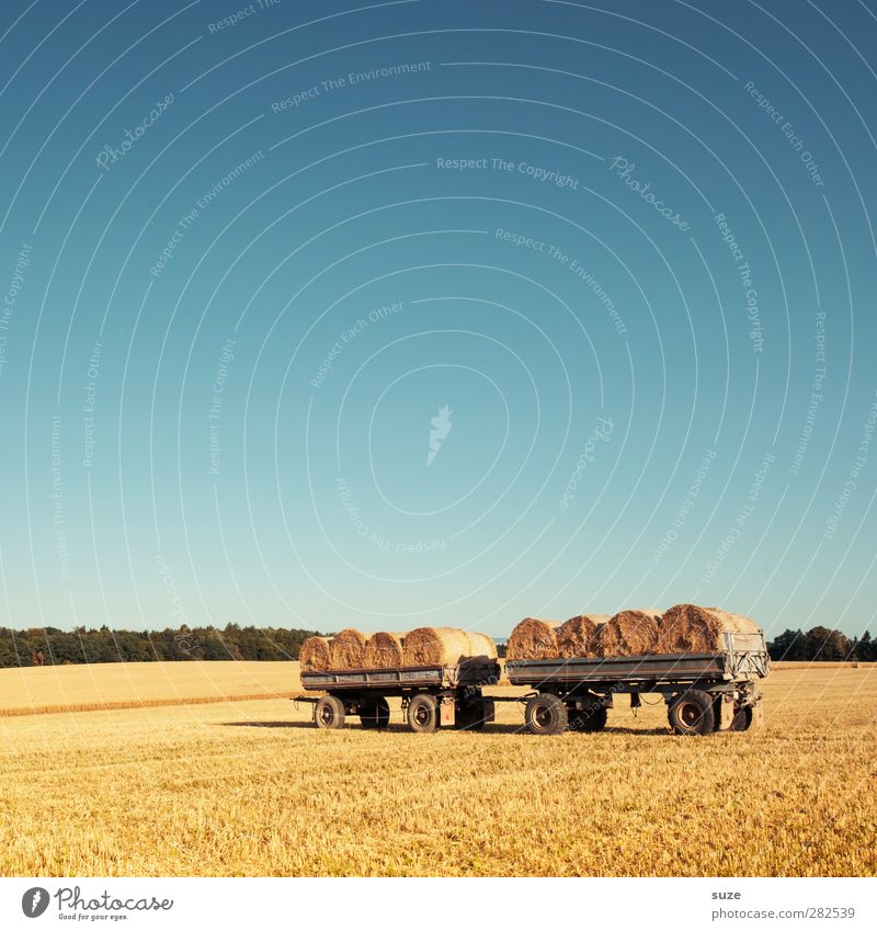 Ordered and not picked up. Grain Summer Agriculture Forestry Environment Nature Landscape Sky Horizon Beautiful weather Warmth Agricultural crop Field Trailer