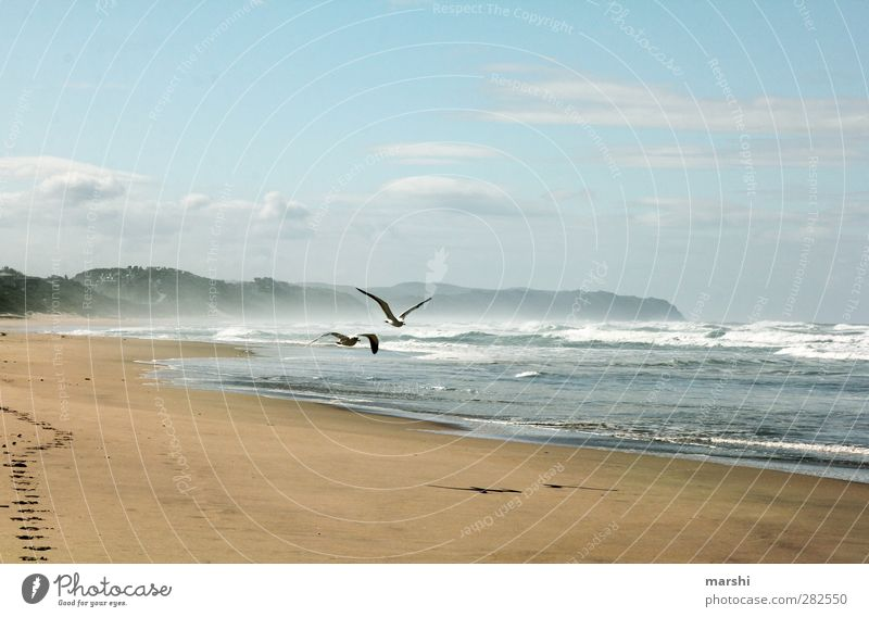 longing Nature Landscape Sand Water Sky Spring Summer Waves Coast Beach Bay Bird 2 Animal Blue Brown Ocean Seagull South Africa Far-off places Undulating