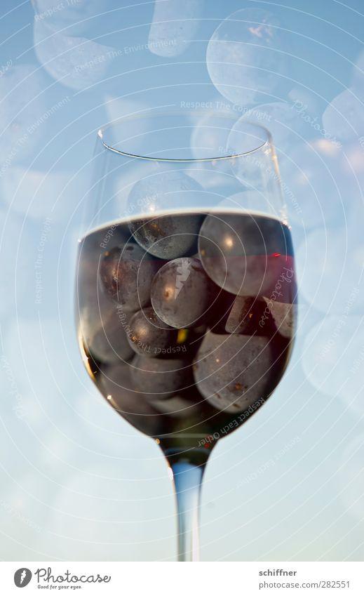sky drop Food Fruit Nutrition Beverage Alcoholic drinks Wine Glass Fluid Blue Pinot Noir Bunch of grapes Vine Vineyard To enjoy Wine glass