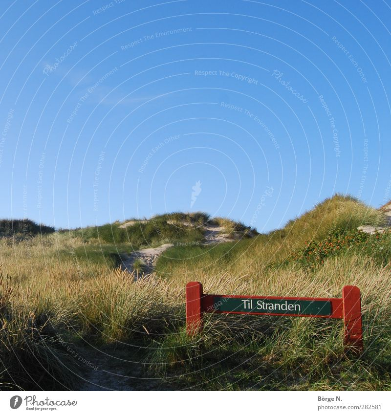 Til strand Swimming & Bathing Vacation & Travel Summer vacation Beach Ocean Nature Landscape Sand Sky Beautiful weather Grass Coast North Sea Denmark Relaxation
