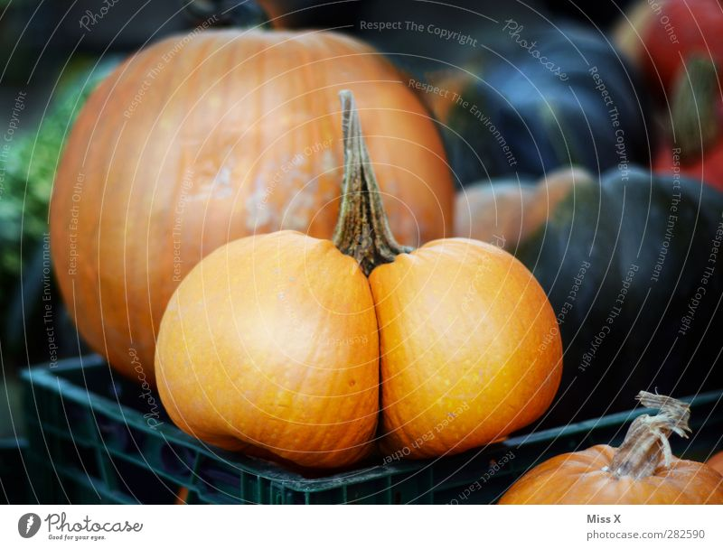 ...bum Food Vegetable Nutrition Organic produce Vegetarian diet Bottom Fat Round Funny Pumpkin Farmer's market Vegetable market Orange Hallowe'en Delicious
