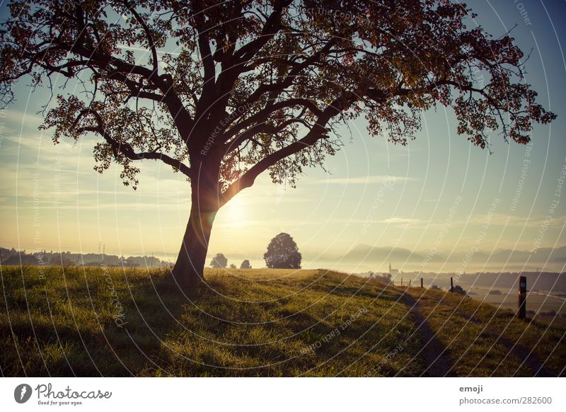 hill Environment Nature Landscape Sky Autumn Beautiful weather Fog Tree Meadow Field Hill Natural Green Colour photo Exterior shot Deserted Morning Dawn