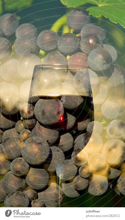 Fruit Nutrition Beverage Vine Wine Delicious Double exposure Alcoholic drinks Berries Vineyard Bunch of grapes Wine glass Red wine Pinot Noir Redwine glass