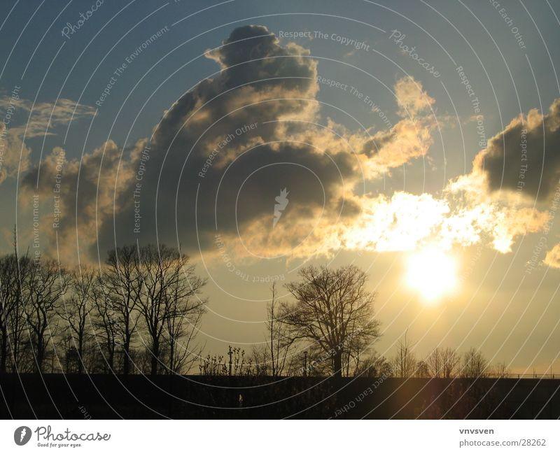 Sky Tree Sun Clouds