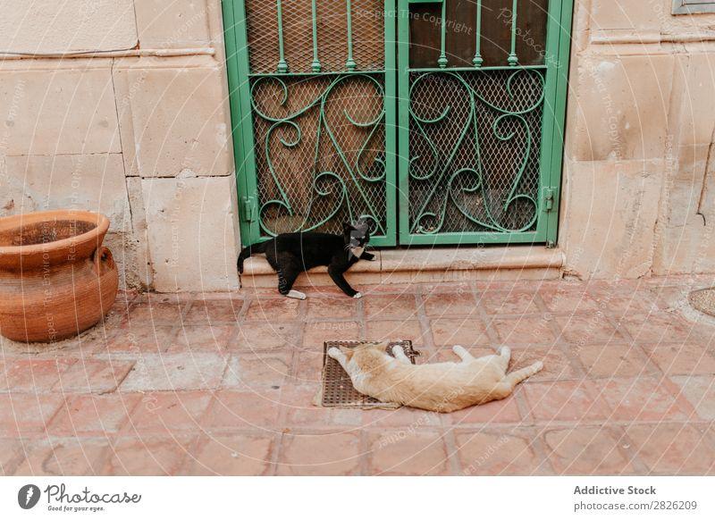 Two cats in front of door Animal Door Cat Fur coat Cute Kitten Pet Couple Companion Lie (Untruth) Doorstep Decoration Painted Metal welded Looking Rest